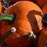pumpkins in Pitt Meadows