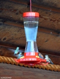 The hummingbirds at Blue Grouse Country Inn