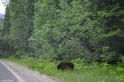 One of the bears we encountered