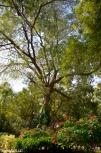 DSC_0036-Bal Samand