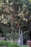 DSC_0099-Bal Samand Palace-gardens
