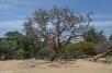 DSC_0107-Bangalore Lalbagh Botanical Gardens