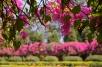DSC_0110-Bangalore Lalbagh Botanical Gardens