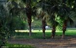 Bal Samand Lake Palace grounds