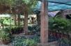 DSC_0208-Bal Samand Palace-veg garden and nursery tour