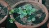 DSC_0212-Bal Samand Palace-veg garden and nursery tour