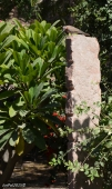 DSC_0779-Chokhelao Garden