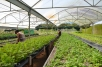 At Henry's organic greenhouses