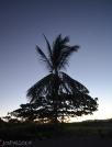 At Playa Ostional
