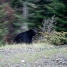 One of the 4 bears I saw
