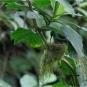 DSC0270-2-Hummingbird in nest-02-27-wp