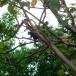 Howler monkeys at Castillo Resort