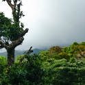 Cloudy Cloud forest this morning