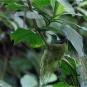 G_DSC0284-3-hummingbird in nest-02-27-wp