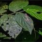 G_DSC0602-tiny lizard-02-25-wp